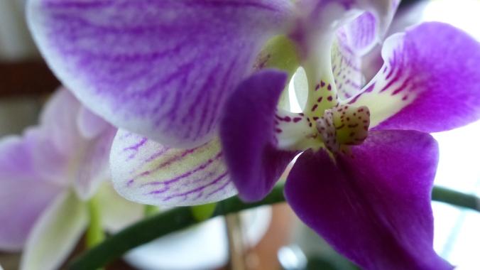 Orchids 005
